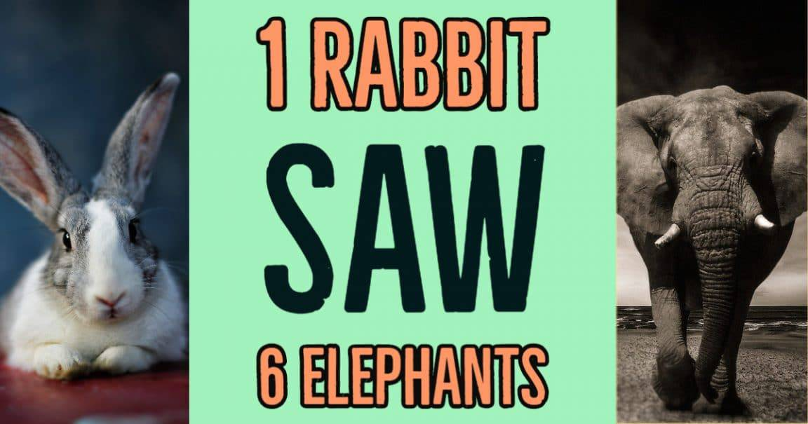 Image to the riddle: 1 rabbit saw 6 elephants