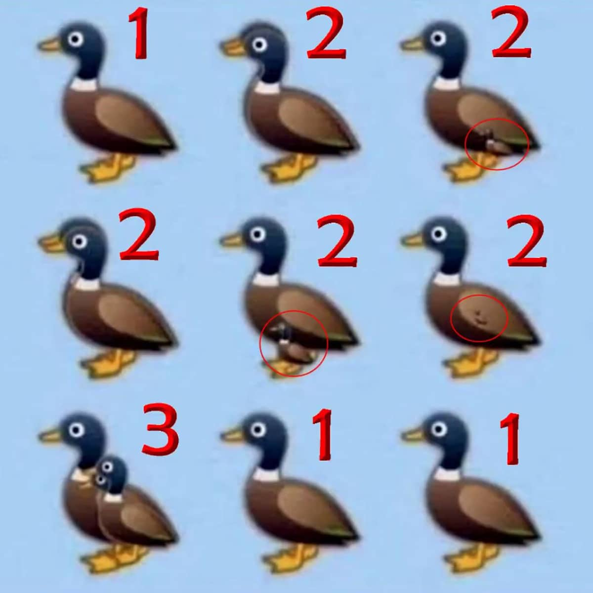 The answer to the riddle: How many ducks do you see?