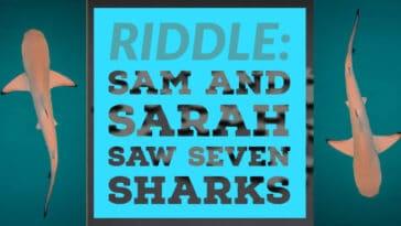 sarah saw seven sharks