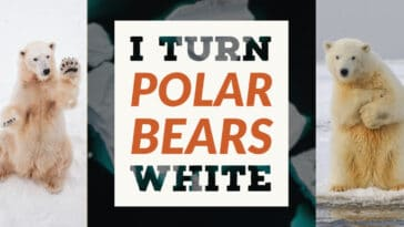 Image to the I turn polar bears white riddle