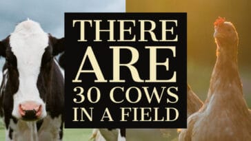"Image to the riddle ""There are 30 cows"""
